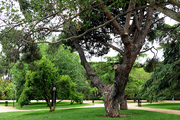 Parque del oeste en Madrid, blog Gavirental